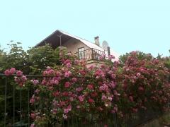 Гостевой дом Оазис Лоо